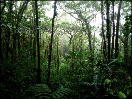 Fondo de la selva peruana
